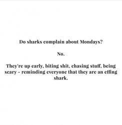 Be a shark today happymonday